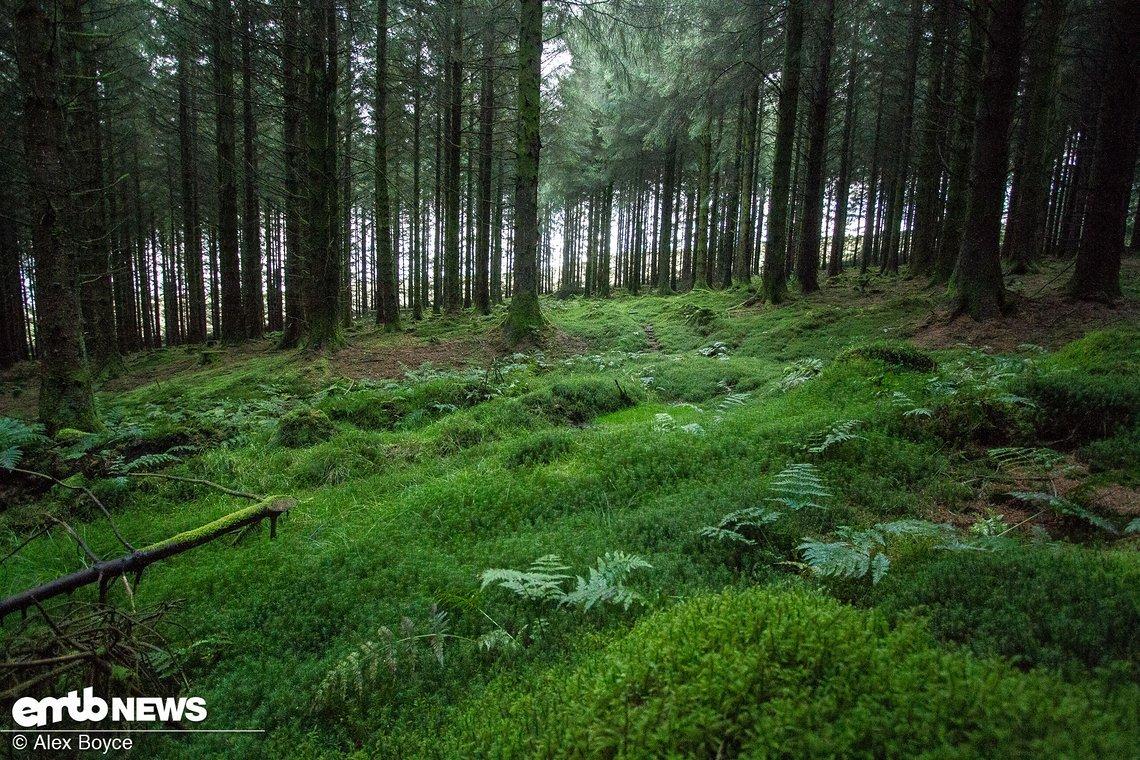 Das Moos in den Wäldern ist Indikator für die hohe Feuchtigkeit das ganze Jahr über