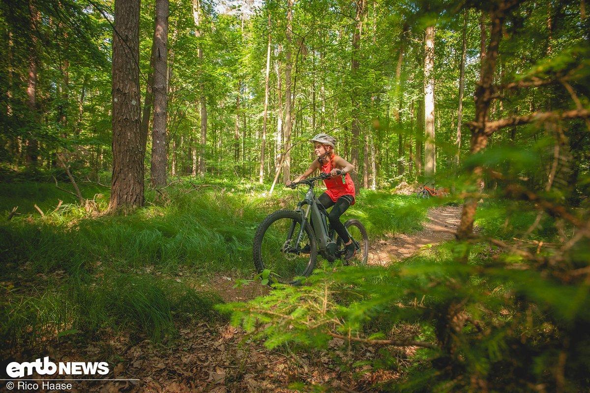 Der Trail war schmal und schlängelte sich sanft durch den Wald