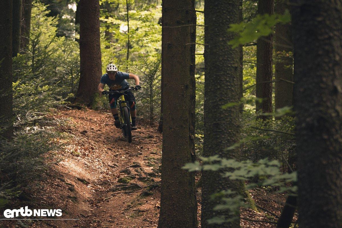 Während unseres Tests waren die Bedingungen im Wald absolut ideal.