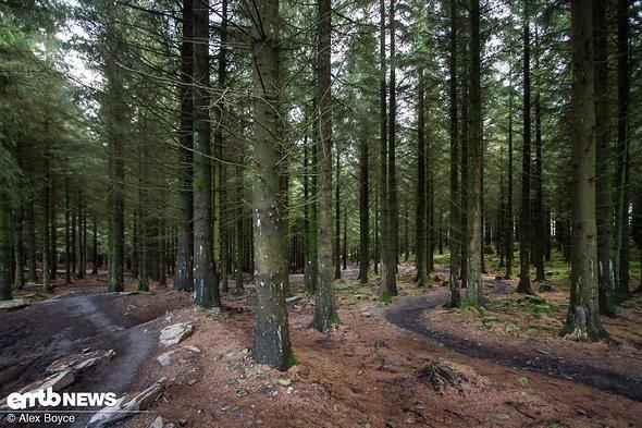 Im Waldabschnitt verlaufen die Wege parallel