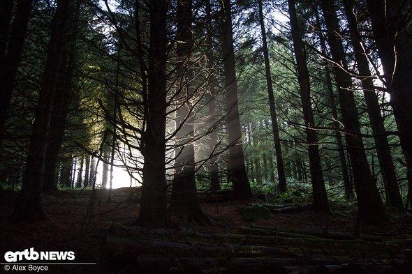 Die Wälder sind sehr mystisch