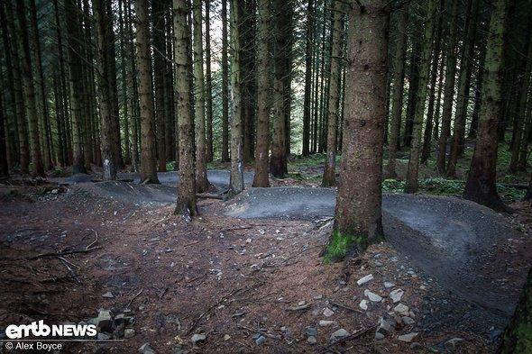 Einige annähernd perfekt angelegte Kurven in den Wäldern.